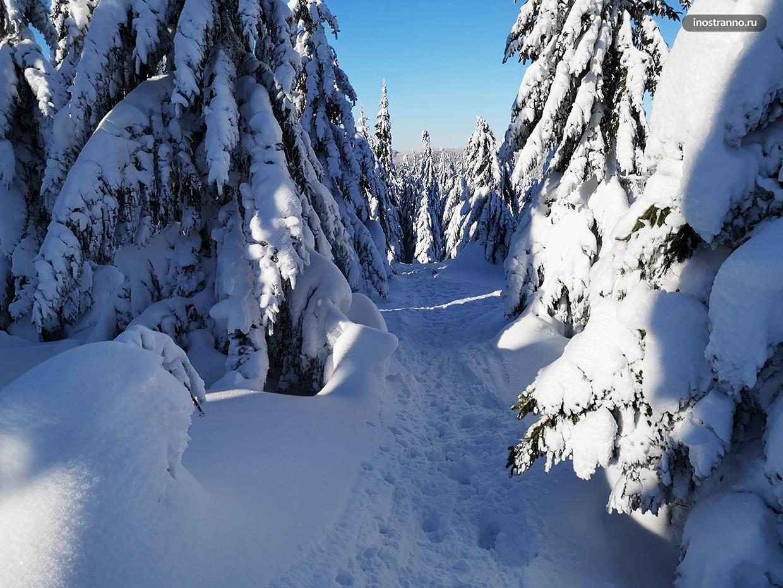 Снег в лесу в Чехии