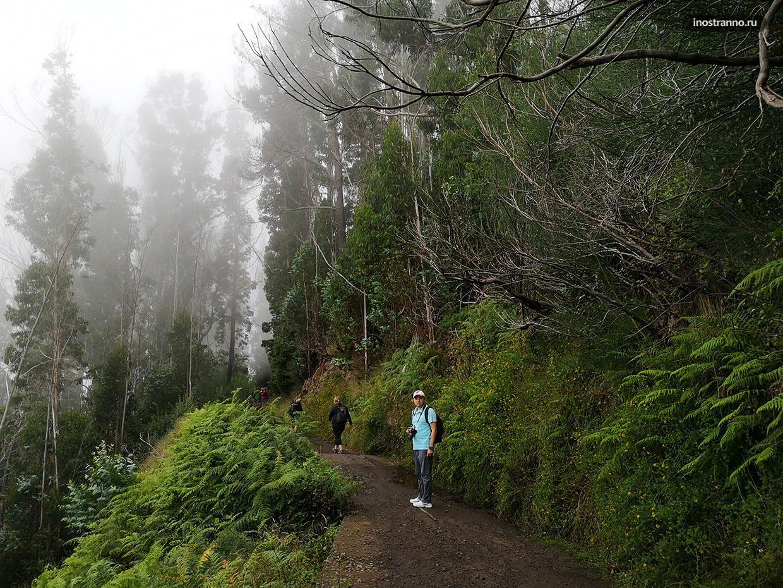 Леса острова Мадейра