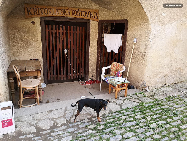 Чешская собака