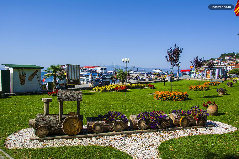 Цветы на берегу Охридского озера