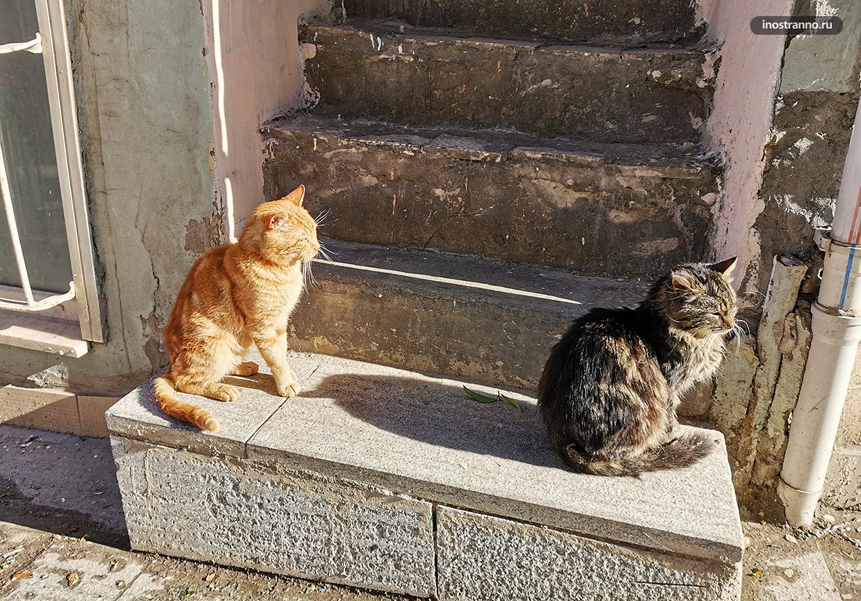 Коты на солнце
