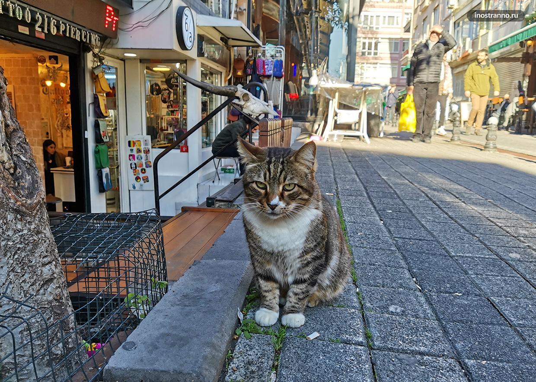 Дружелюбный кот в Стамбуле