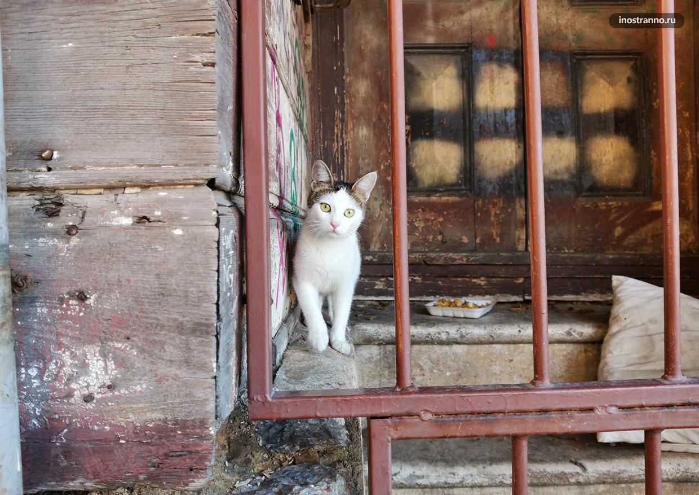 Бездомный котик