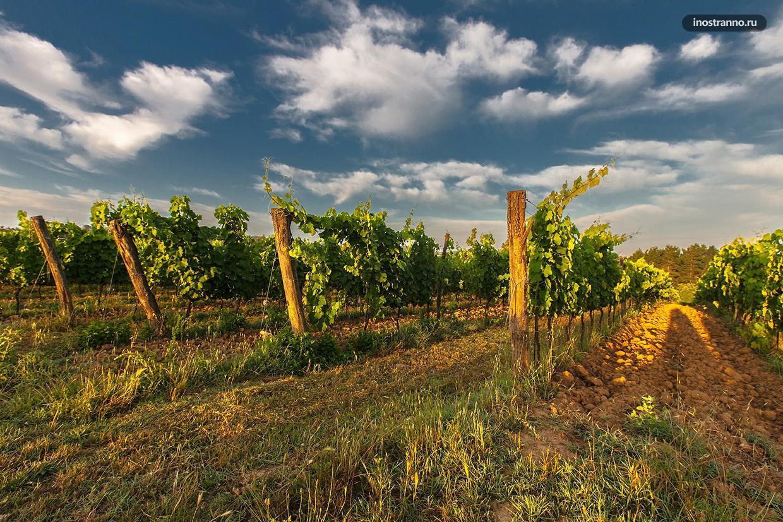 Винодельни Крыма