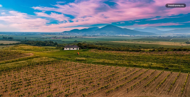 Токайские виноградники в Венгрии