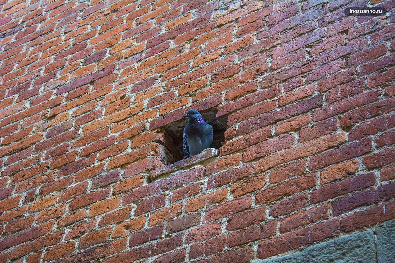 Голубь в стене