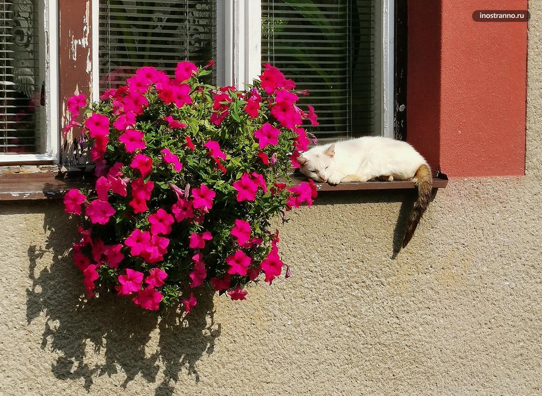 Кот нежится на солнышке