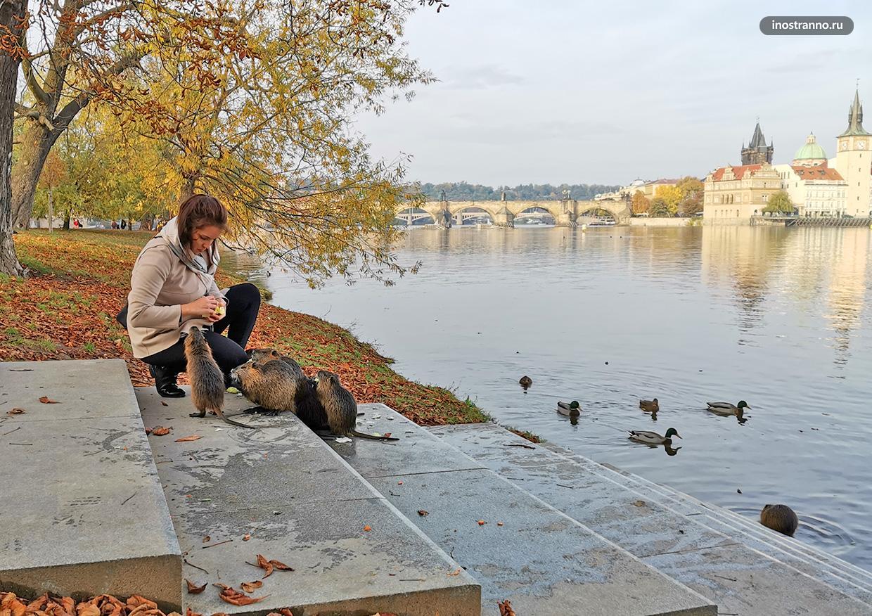 Животные в центре Праги