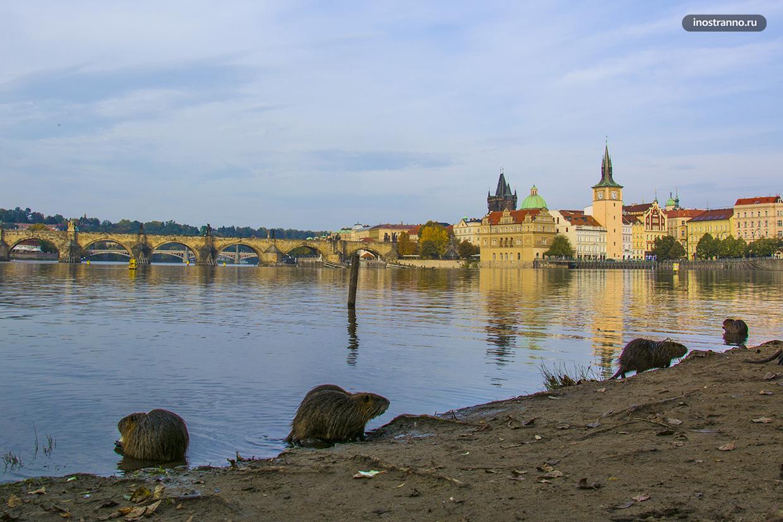 Река в Праге Влтава