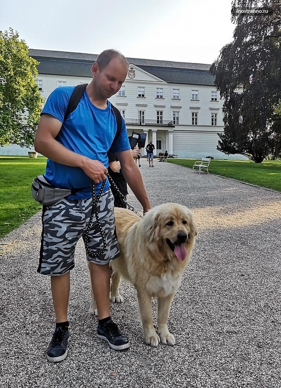 Словацкий чувач большая собака из Чехии