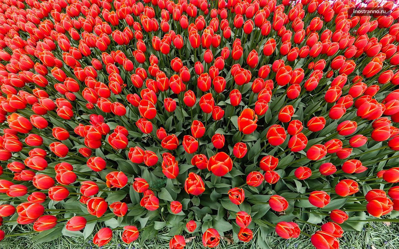 Гезтепе парк тюльпанов в Стамбуле