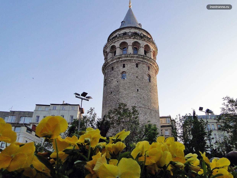 История тюльпанов в Стамбуле и Турции