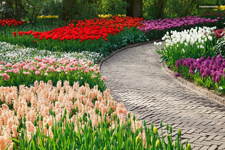 Когда цветут Тюльпаны в Стамбуле и когда лучше ехать