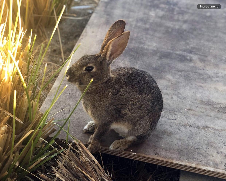 Милый маленький кролик