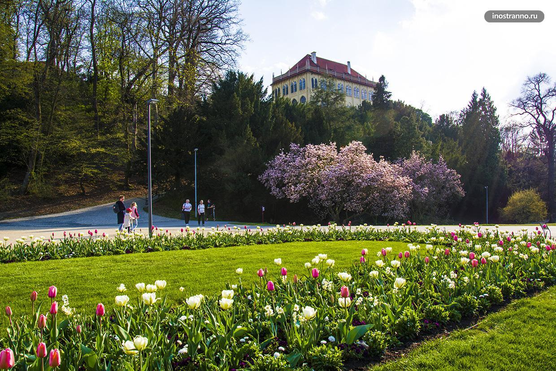 Прага парк Стромовка с цветущей магнолией и тюльпанами