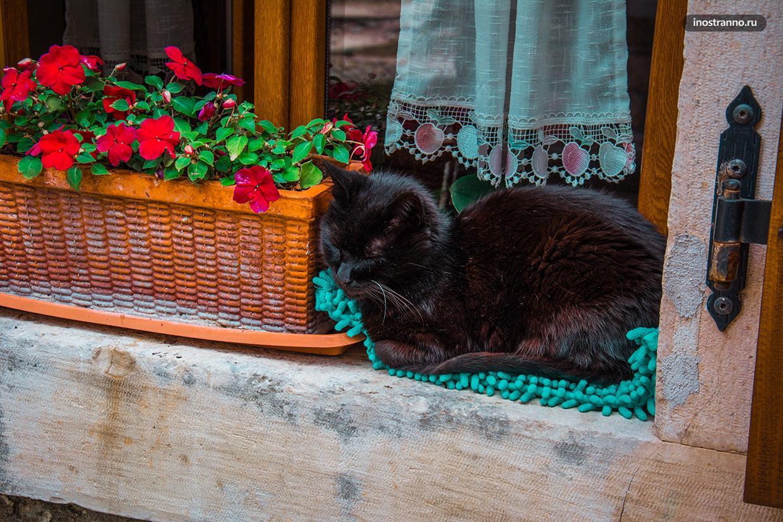 Сонный кот в Хорватии